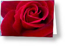 Love Red Rose Greeting Card