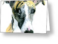 Love That Whippet Greeting Card