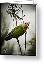 Lovebird  Greeting Card