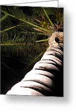 Lovely Bunch Of Coconuts Greeting Card