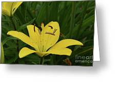Lovely Close Up Of A Yellow Lily In Full Bloom Greeting Card