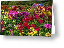 Lovely Dahlia Garden Greeting Card