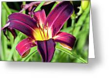 Lovely Day Lily Greeting Card