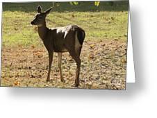 Lovely Deer Greeting Card