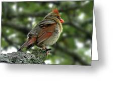 Lovely Female Cardinal Greeting Card