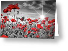 Lovely Field Of Poppies With Sun  Greeting Card