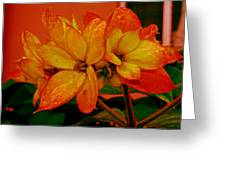 Lovely Flowers1 Greeting Card