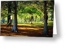 Lovely Grouping Of Trees In Mississippi Greeting Card