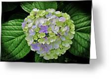 Lovely Hydrangea Greeting Card