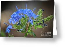 Lovely In Blue Greeting Card