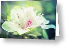 Lovely In White Greeting Card