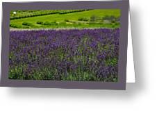 Lovely Lavender  Greeting Card