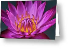 Lovely Lily II Greeting Card
