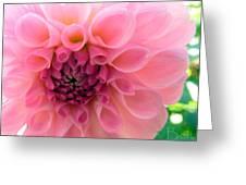 Lovely Linda Greeting Card