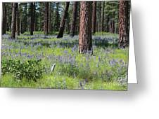 Lovely Lupine In The Mountains Greeting Card
