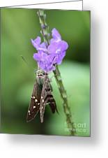 Lovely Moth On Dainty Flower Greeting Card