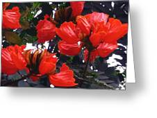 African Tulips Greeting Card