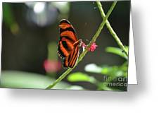 Lovely Orange Oak Tiger In The Spring Greeting Card