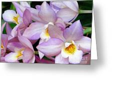 Lovely Orchid Family Greeting Card