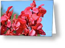 Lovely Pink Flowers  Greeting Card