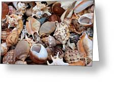 Lovely Seashells Greeting Card