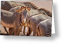 Lovely Stripes  7589 Greeting Card