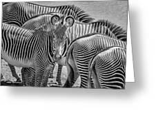 Lovely Stripes  7589bw Greeting Card