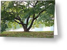 Lovely Tokyo Tree With Pond Greeting Card