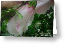 Lovely White And Pink Flowers Greeting Card