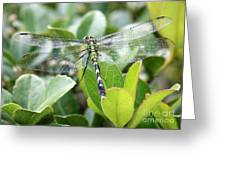 Lovely Wings Greeting Card