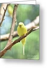 Lovely Yellow Budgie Parakeet In The Wild Greeting Card