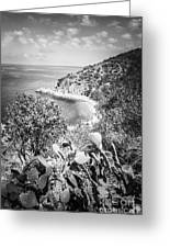 Lover's Cove Catalina Island Black And White Photo Greeting Card