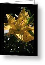 Lover's Lilly II Greeting Card