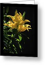 Lover's Lilly Greeting Card