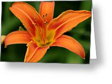 Lovers Lily Greeting Card