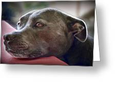 Loving Pitbull Eyes Greeting Card