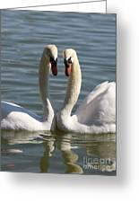 Loving Swans Greeting Card
