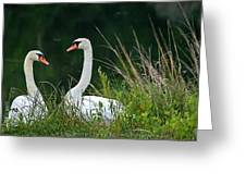 Loving Swans Greeting Card