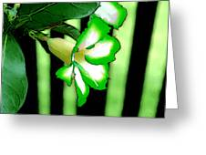 Loving The Color Green Greeting Card