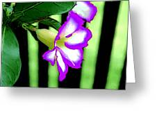 Loving The Color Purple Greeting Card