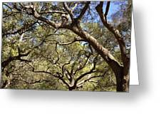 Low Angle View Of Trees In A Park Greeting Card