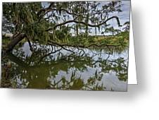 Low Country Days Greeting Card