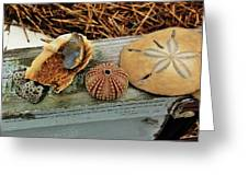 Low-country Still-life Greeting Card