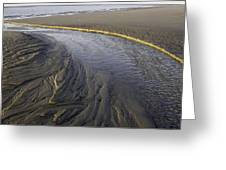 Low Tide Morning Greeting Card