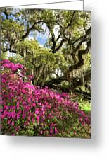 Lowcountry South Carolina Spring Azalea And Live Oak Greeting Card