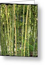 Lucky Bamboo Greeting Card