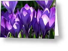 Luminous Floral Geometry Greeting Card