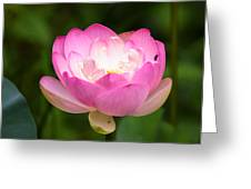 Luminous Lotus Blossom Greeting Card