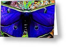 Luna Moth Uv Pano Greeting Card
