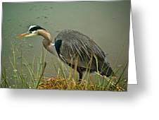 Lunch Time For The Heron Greeting Card